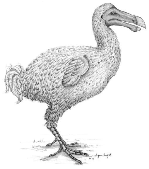 Reconstrucción de un dodo