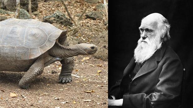 Darwin consideraba que eran «exquisitas». Las degustó en forma de sopas y filetes
