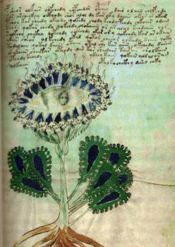 Ilustración del manuscrito Voynich