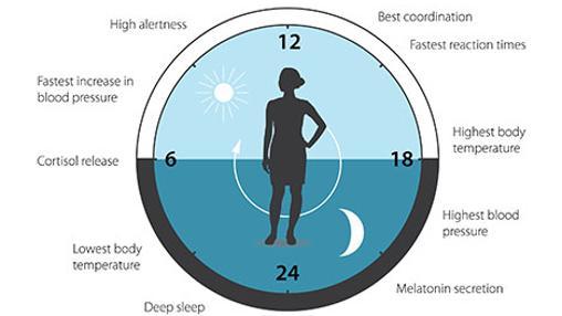 El reloj circadiano anticipa y adapta nuestra fisiología a las diferentes fases del día