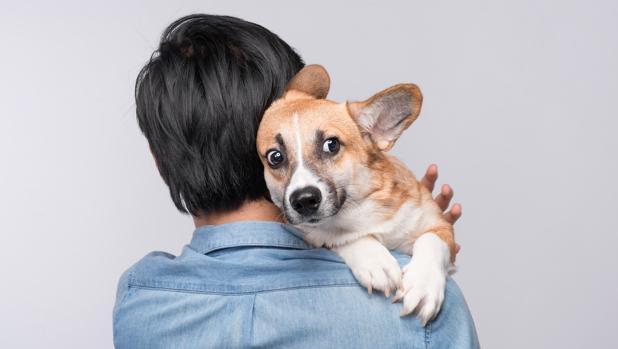 Los perros reciben señales químicas de las emociones humanas