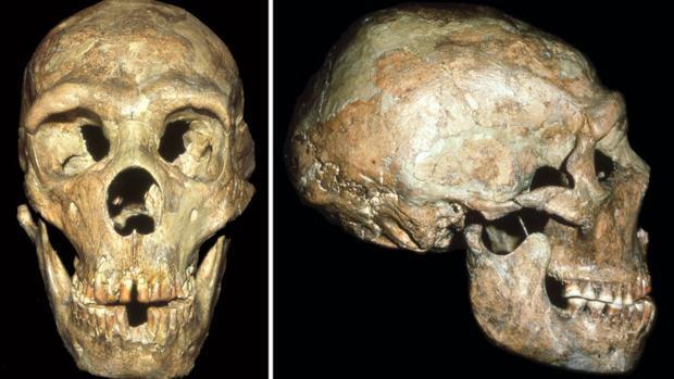 El cráneo de Shanidar 1 muestra señales de un golpe en la cabeza recibido a una edad temprana