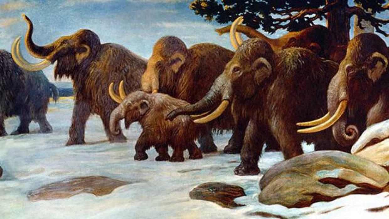 Los machos de mamut morían tontamente por no seguir a las hembras