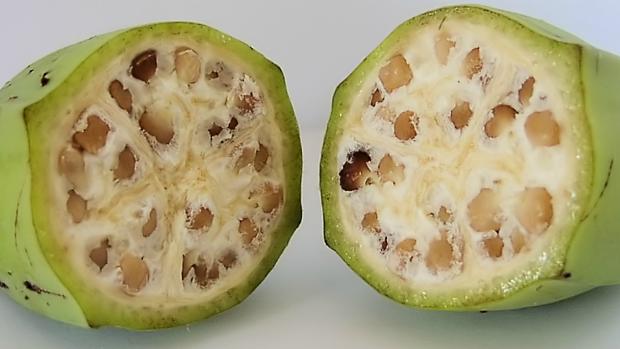 Un plátano silvestre, tal y como era antes de que el hombre comenzara a cultivarlos hace 10.000 años