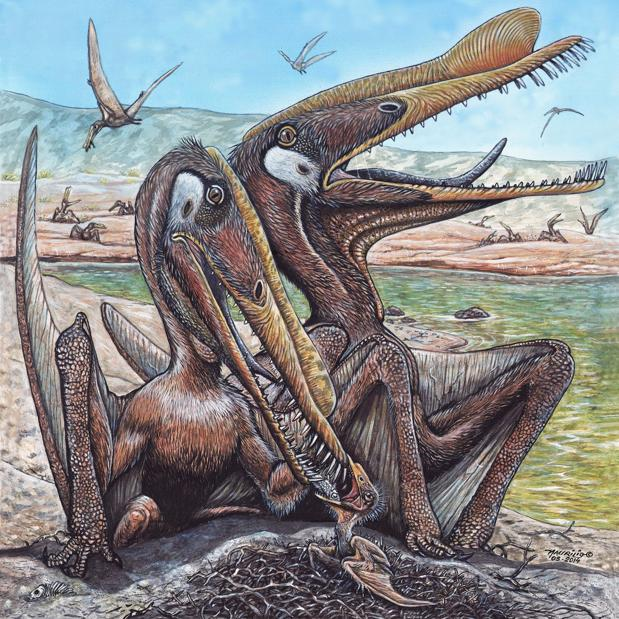 Pterosaurios Hamipterus tianshanensis