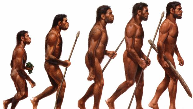 Ni más altos ni más fuertes… ¿Ha alcanzado su límite la especie humana?