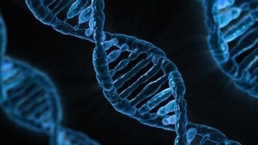 Científicos cambiaron cambiar individualmente letras del ADN