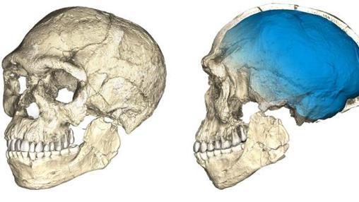 Reconstrucción del cráneo hallado en Jebel Irhoud, Marruecos