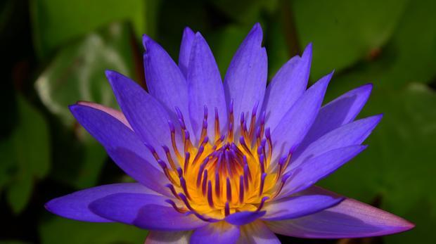 Las plantas con flor constituyen el 90 por ciento de las plantas terrestres