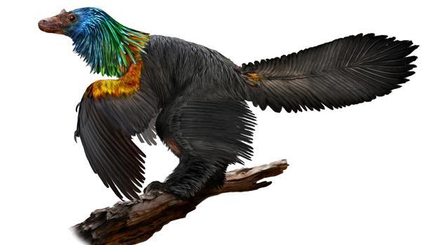 Hallan un espectacular dinosaurio arcoiris con plumas iridiscentes