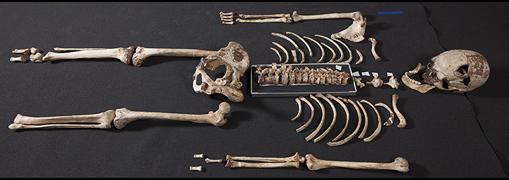 Esqueleto del hombre de Cheddar
