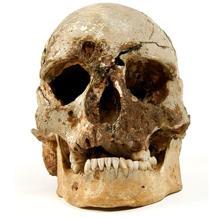 El cráneo del hombre de Cheddar