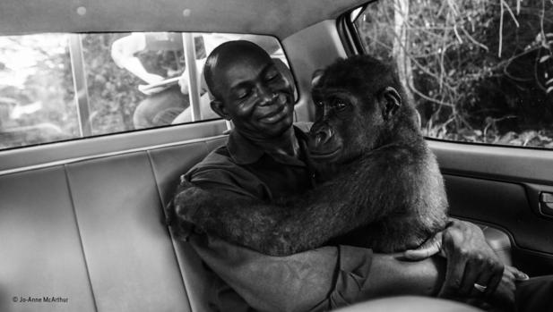 La gorila «Pikin» abraza a su cuidador