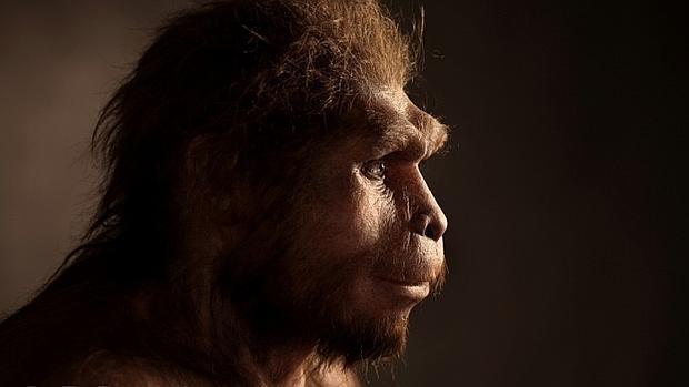 Reconstrucción de un homo erectus