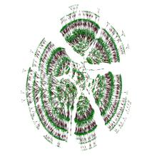 Árbol genealógico de 6.000 personas y siete generaciones