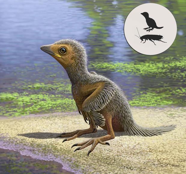 Así era un pajarito de la época de los dinosaurios