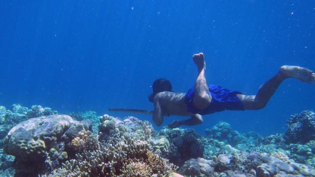 Un buceador Bajau cazando peces con una lanza tradicional