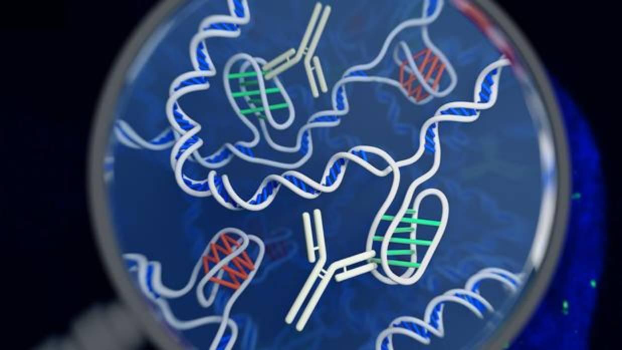 Hallan una nueva estructura en nuestro ADN, distinta de la «doble hélice»