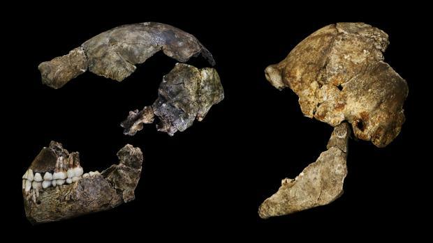 El cerebro del Homo naledi era diminuto pero tenía algunas características sorprendentemente humanas
