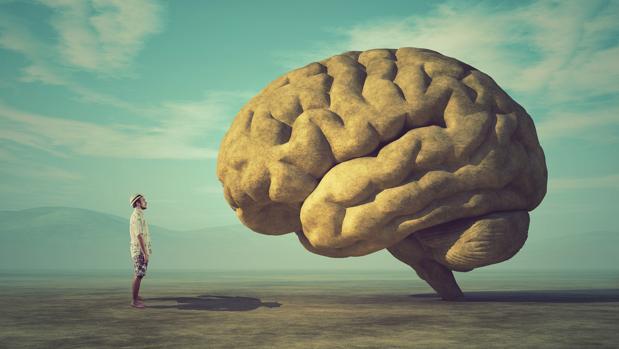 El motivo del gran desarrollo del cerebro humano es objeto de un intrincado debate
