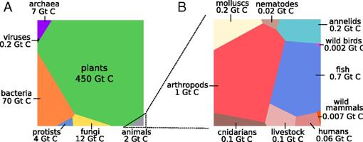 Distribución de la masa en forma de carbono (Gt C) entre todos los seres vivos