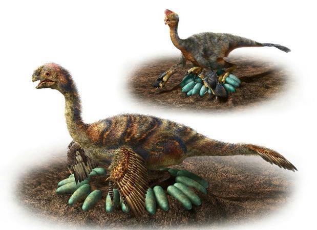 Los animales del género «Oviraptosaurus»
