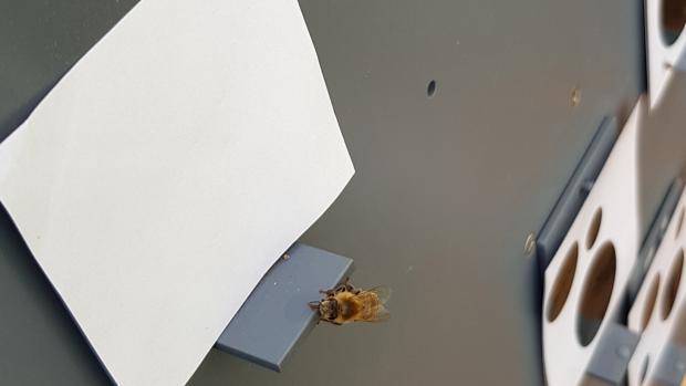 Las abejas fueron entrenadas para posarse en los puntos donde hubiera más o menos puntos negros. Consideraron la ausencia de manchas, como un número inferior al uno