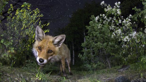 Un zorro bajo el cielo nocturno