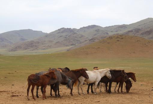 Varios caballos se congregan cerca de uno de los yacimientos arqueológicos estudiados