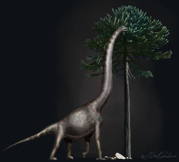 Representación de «Bigfoot», un saurópodo, como los diplodocus, que vivió en América del Norte