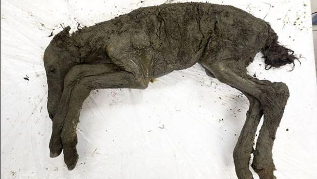 Los restos del caballo, examinados por los investigadores