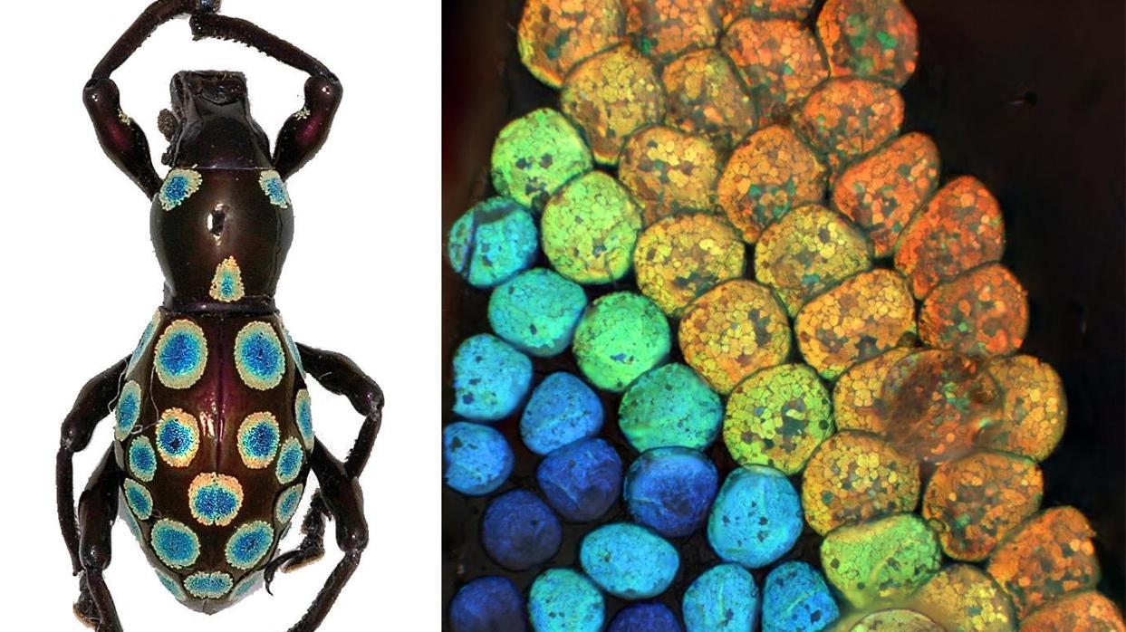 Descubren un color completamente nuevo en un animal terrestre
