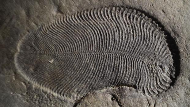El primer animal que dejó un fósil en la Tierra
