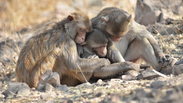 Algunos científicos creen que ciertas especies sienten dolor real por la pérdida