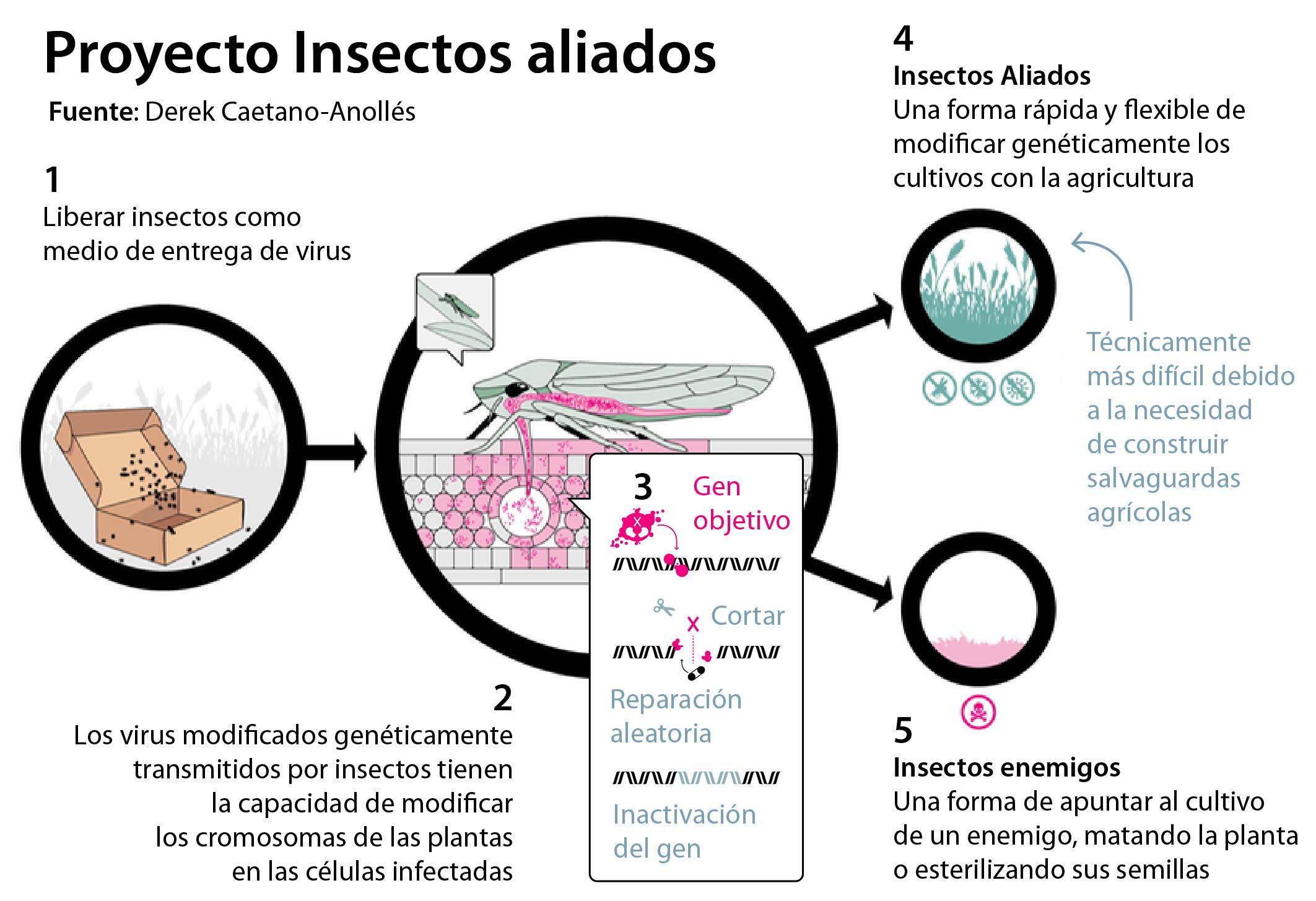 Así es cómo funciona «Insectos Aliados», según los autores del artículo
