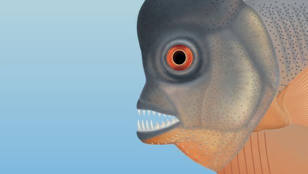Recreacion del pez jurásico similar a una piraña