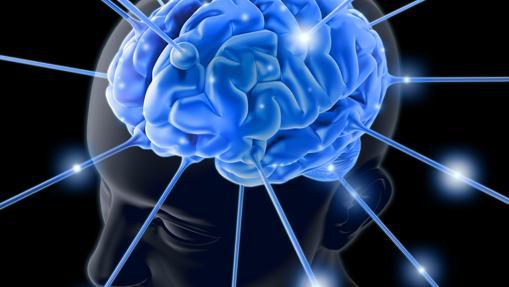 Decir que el cerebro es como un ordenador es como comparar un invernadero de tomates con el planeta Tierra