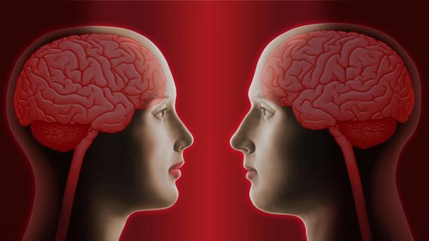 El cerebro masculino y el femenino sí son diferentes