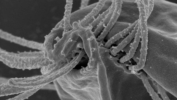Estos extraños organismos no pertenecen a ningún grupo conocido