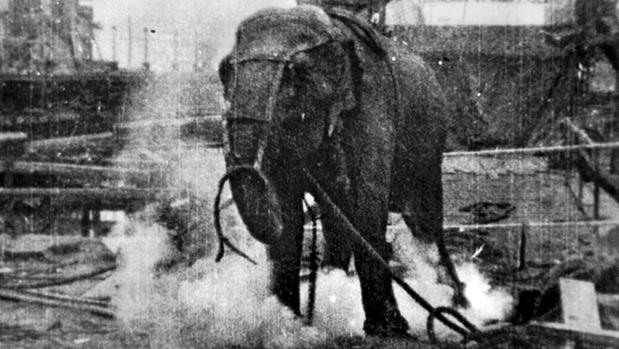 Un fotograma de la película «Electrocutación de un elefante», de Thomas Alva Edison