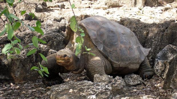 Resultado de imagen para Tortugas gigantes poseen genética relacionada con la reparación del ADN: le permite ser más longeva