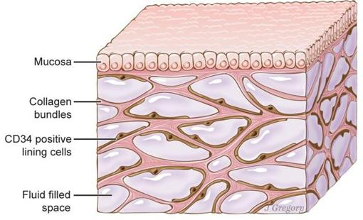 The interstitium shown in the image is under the skin and covers the lungs, blood vessels, muscles, etc.