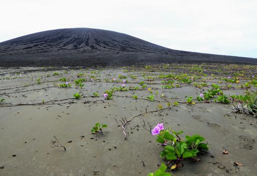 Vegetación en el istmo plano de Hunga Tonga-Hunga Ha'apai. El cono volcánico está en el fondo