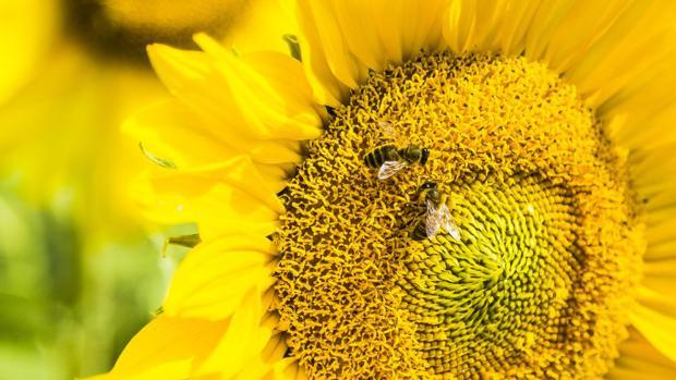 Científicos enseñan a las abejas a sumar y restar