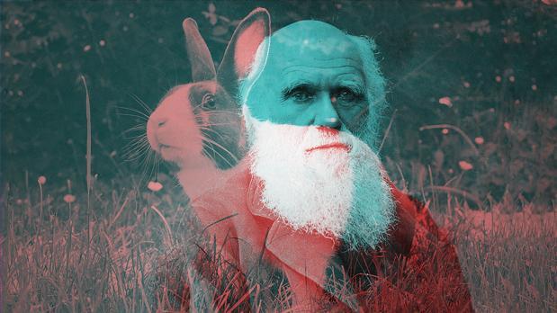 Una de las muestras utilizadas en el estudio es la de un conejo que perteneció a Darwin