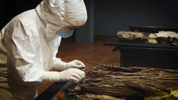 Toma de muestras en momias aborígenes en El Museo Canario (Gran Canaria)
