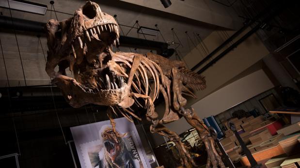 «Scotty», el tiranosaurio rex más grande del mundo