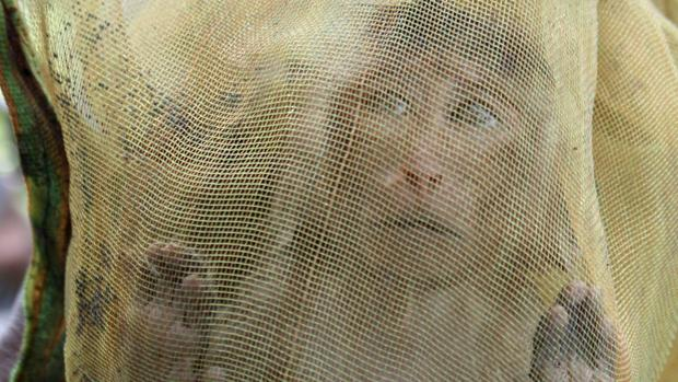 Mono capturado en Camboya para la investigación en China