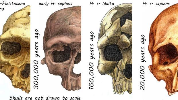 ¿Por qué el rostro humano es como es?