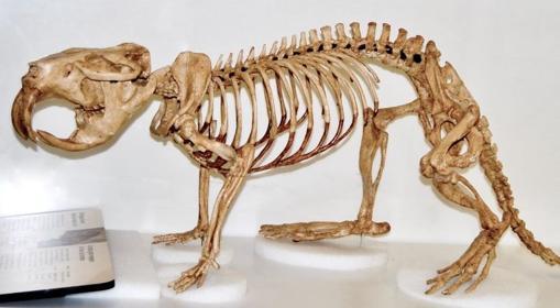 Un esqueleto de castor gigante
